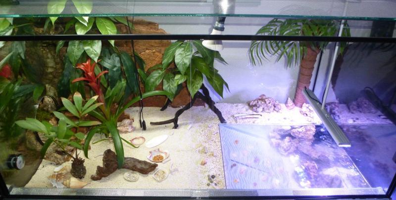 teilwasserwechsel im aquarium